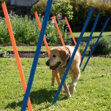 Agility Dog  l'addestramento cane gioco  Sport