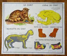 carte d'école - affiche scolaire 1960 Rossignol - le chat et le singe