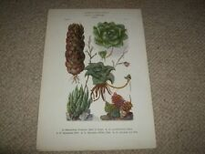 Antique (Pre-1900) Multi-Colour Botanical Art Prints