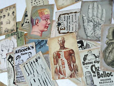 50 Vintage Anatomy Skull Skeleton Doctor Medical Student Nurse Junk Journal Card