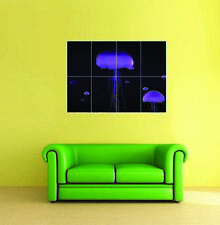Jellyfish Giant Wall Art New Poster Print Picture