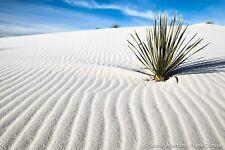 *** Natural White 🏖️ 5lb Bulk Beach Sand 🐠 Crafts Wedding Craft 🐠 ***