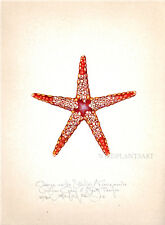 Sea ORANGE MARBLE STARFISH original limted edition SIGNED handworked LARGE print