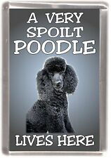 "Poodle Dog Fridge Magnet No.1  ""A VERY SPOILT POODLE LIVES HERE"" by Starprint"