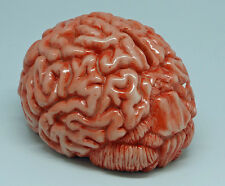 Hucha cerebro horror zombi decoración artículos de broma aprox. 17 cm
