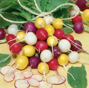 Radish multi coloured - 20 seeds