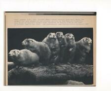 Prairie Dogs for sale, Benson's Animal Park, Oct. 1987. - LaserPhoto