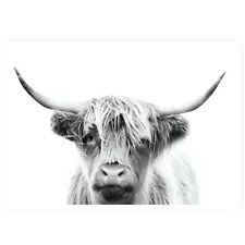 Scottish Highland Cow  Framed Canvas Ready to Hang wall Canvas choose your size
