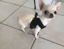 Tiny Mini XXS Dog Harness Lead Set Puppy Chihuahua Yorkie Rabbit Cat Black 26cm