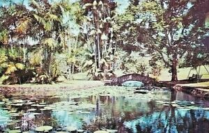 Vintage Postcard Panama Canal Zone Summit Gardens Lily Pond