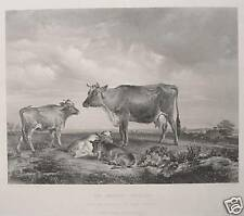 Thomas Sidney Cooper Isle of Wight Osborne Kühe Cattle England South Hampton Cow