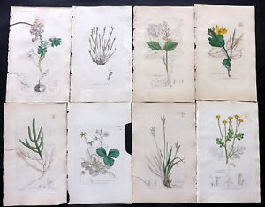 Sowerby C1840 Lot of 12 Partial Hand Col Botanical Prints. Flowers, Book Plates