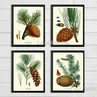 Unframed Pinecone Botanical Print Wall Art Set 4 Antique Pine Tree Home Decor