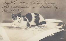 RPPC 1907 Kitten Cat on picture soup bread Berlin 7803
