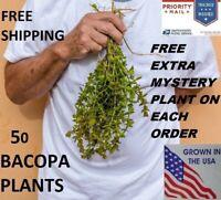 50 Bacopa  live aquarium plants planted tank beginner plant  aquascaping