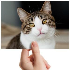 "Tabby Cat Kitten Pet Animal Small Photograph 6"" x 4"" Art Print Photo Gift #8343"