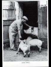 LASCAUX (19) CORPS de FERME / JEANTOU CEYRAT & ses COCHONS en 1980