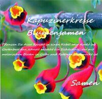 25x Kapuzinerkresse Samen Hingucker Kletterpflanze Pflanze Rarität Blumen #96