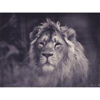 Bredesen Male African Lion Canvas Wall Art Print