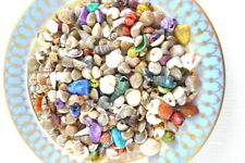Miniature Natural Shells Home Beach Decor Display Dioramas