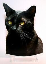 statuette photosculptée 10x15 cm chat europeen gouttiere x20 catze gato cat