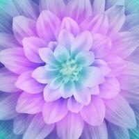 "Dream Big~Dragonfly~ Digital Floral Panel 43""""""""X 43"""""""" Hoffman Cotton Fabric"