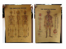 "Set 2 PCS Human Skeletal Nervous Vintage Poster Medical Art Wall Decor 12""x14"""