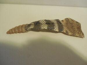 598-SKI-G4159 Real Texas Western Rattlesnake Skin with Rattle N Gallery