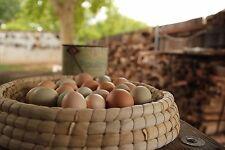 Egg basket Nesting Basket Chickens
