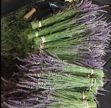 Natural Dried French Provence Fragrant Lavender Bunch Tied by Hand Stems.
