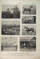 Original Old Antique Print Royal Agricultural Show York Parade Livestock 1900