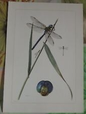 Objet scolaire planche insecte N°3 Agrion Nain Anax Empereur