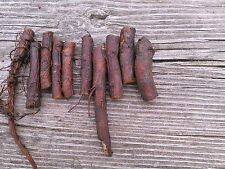 """10 2"""" long Russian Comfrey root cuttings superior Bocking #4  permaculture"""