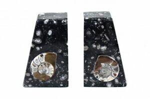 Fossil Stone Buchstützen aus Fossilen Marmor Orthoceras Ammonite aus Marokko NEU
