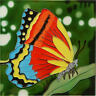 Colorful Butterfly -  Decorative Art On Ceramic Tile  By Beautyful Decor