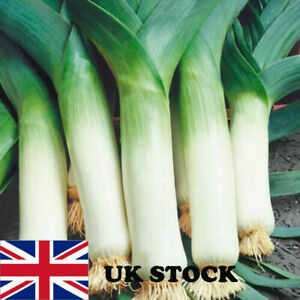 Leek  Seeds -50 Swiss Giant Zermatt F1 best British live seed eco brown packet