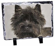 AD-CT1RSL Cairn Terrier with Red Rose Photo Slate Christmas Gift Ornament
