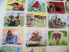 Memory Card Game for Children Animals - Birds in Color 50 Cards Educational