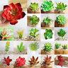 Various Fake Succulent Stem Realistic Flower Plant Grass Landscape Garden Decor