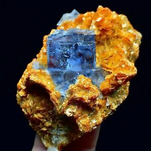 103g China Famous Mineral Deep Blue Cube Fluorite Crystal Based on Golden Mica