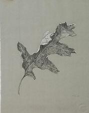 Original Katherine Shubert-Kuniyoshi Schmidt (1898-1978) Still Life Leaf Drawing