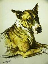 K.F. Barker Sweet Bull Terrier 1938 Dog Print Matted