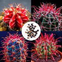 20pcs Rare Red Cactus Seeds Succulent Bonsai Plant Home Garden Décor