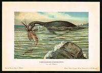 1900 Plesiosaurus Dinosaur, Marine Prehistoric Lizard, Antique Print