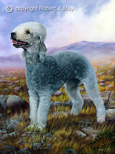 Bedlington Terrier Ltd. Edition Print by Robert May