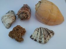 Coquillages - Batch of shells