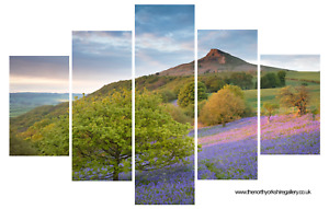Roseberry Topping Bluebells Sunset Yorkshire Moors Wall Art Photography Canvas