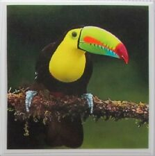 New listing Set of 4 - Handmade Natural Stone Ceramic Tile Drink Coasters - Toucan 2 C