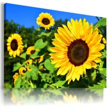 SUNFLOWERS YELLOW SUMMER FLOWER FIELDS Canvas Wall Art Picture Large FL27 MATAGA