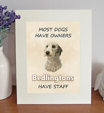 "Bedlington Terrier 10""x8"" Free Standing ""Bedlingtons Have Staff"" Picture Mount"